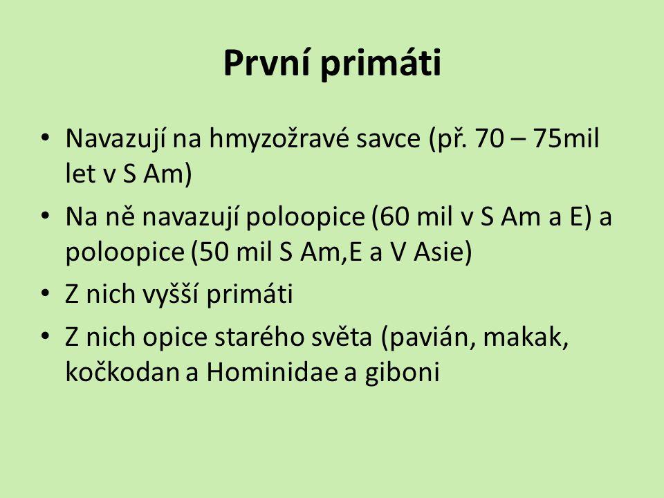 První primáti Navazují na hmyzožravé savce (př.