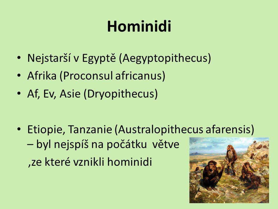 Hominidi Nejstarší v Egyptě (Aegyptopithecus) Afrika (Proconsul africanus) Af, Ev, Asie (Dryopithecus) Etiopie, Tanzanie (Australopithecus afarensis) – byl nejspíš na počátku větve,ze které vznikli hominidi