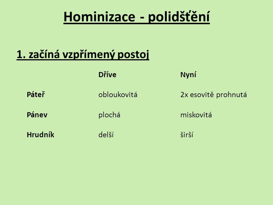 Hominizace - polidšťění 1.
