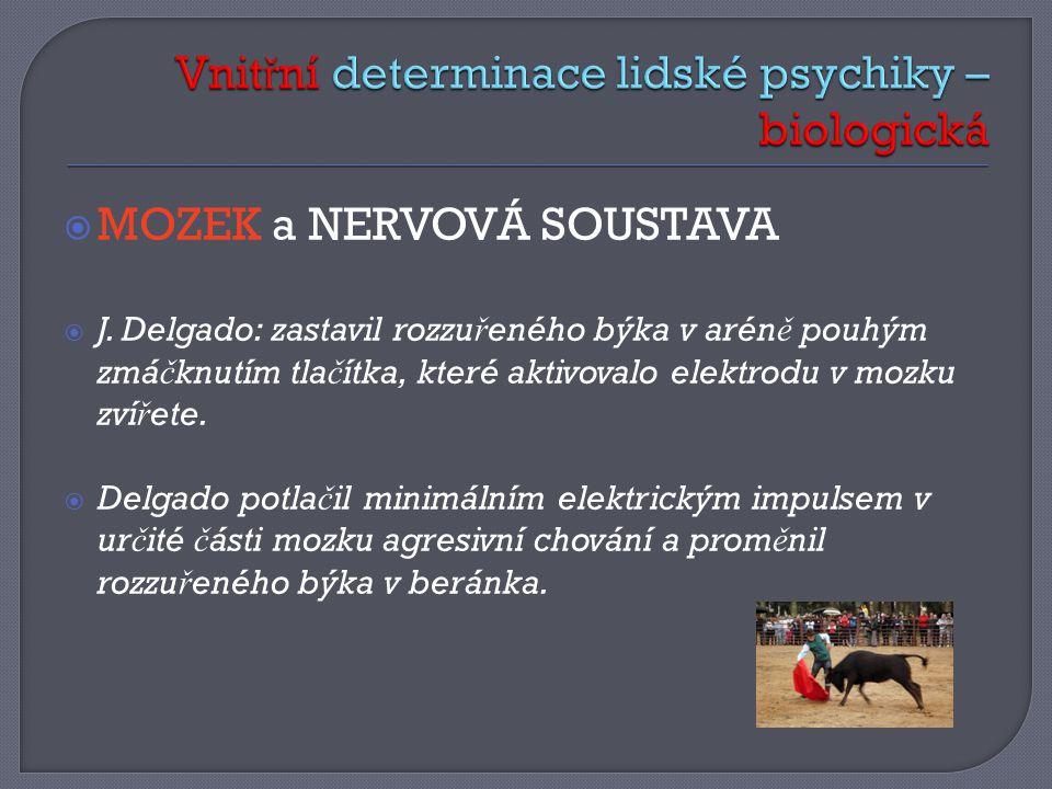  MOZEK a NERVOVÁ SOUSTAVA  J.