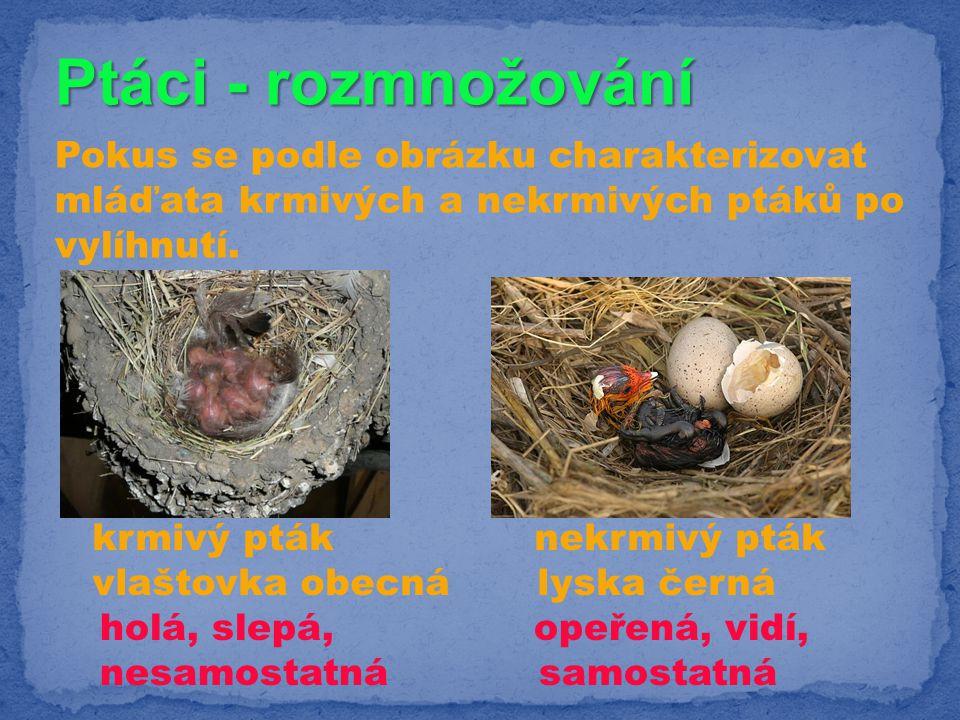Ptáci - rozmnožování Pokus se podle obrázku charakterizovat mláďata krmivých a nekrmivých ptáků po vylíhnutí. krmivý pták nekrmivý pták vlaštovka obec