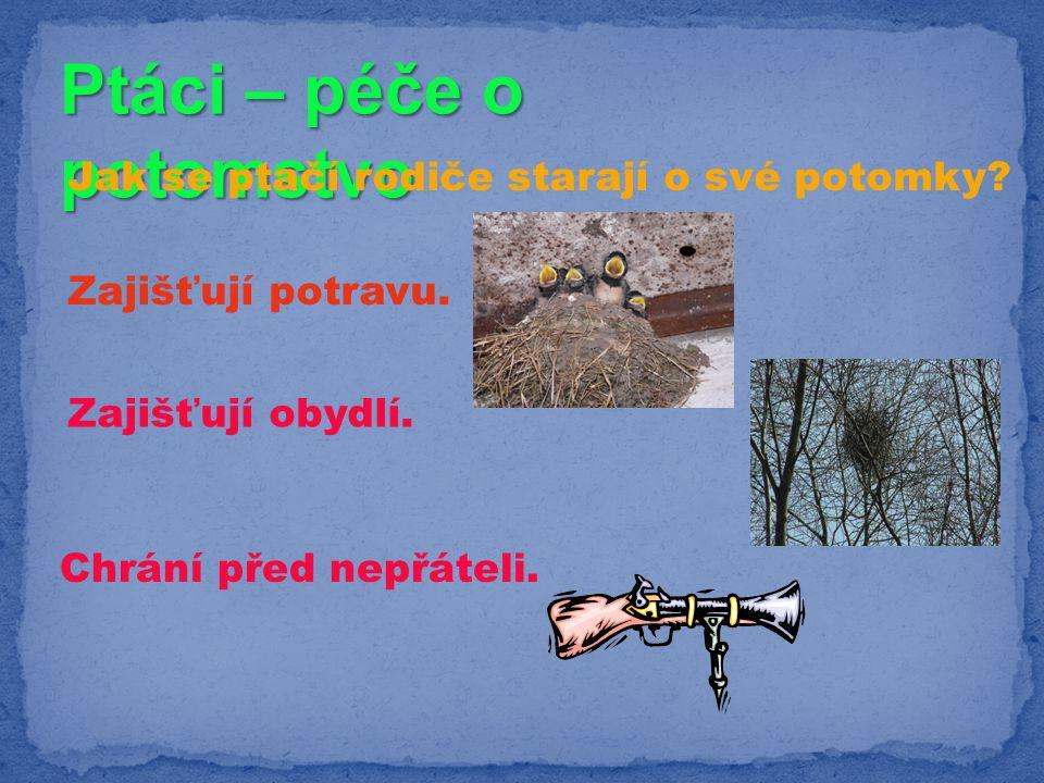 Ptáci – péče o potomstvo Jak se ptačí rodiče starají o své potomky? Zajišťují potravu. Zajišťují obydlí. Chrání před nepřáteli.