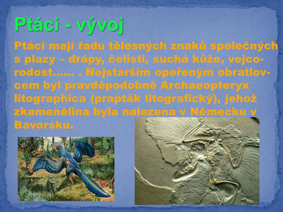Ptáci - vývoj Archeopteryx - patří mezi ope- řené dvounohé dinosaury plazí znaky: ptačí znaky:.