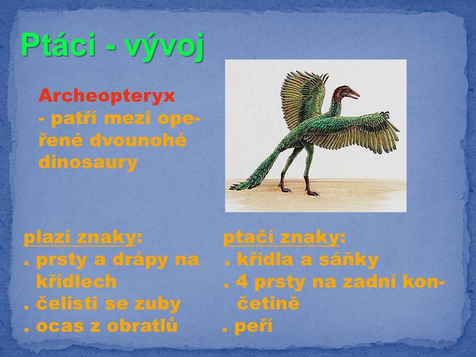 Ptáci - vývoj Archeopteryx - patří mezi ope- řené dvounohé dinosaury plazí znaky: ptačí znaky:. prsty a drápy na. křídla a sáňky křídlech. 4 prsty na