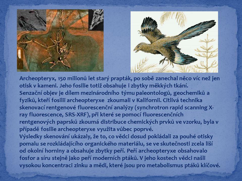 Archeopteryx, 150 milionů let starý prapták, po sobě zanechal něco víc než jen otisk v kameni. Jeho fosilie totiž obsahuje i zbytky měkkých tkání. Sen