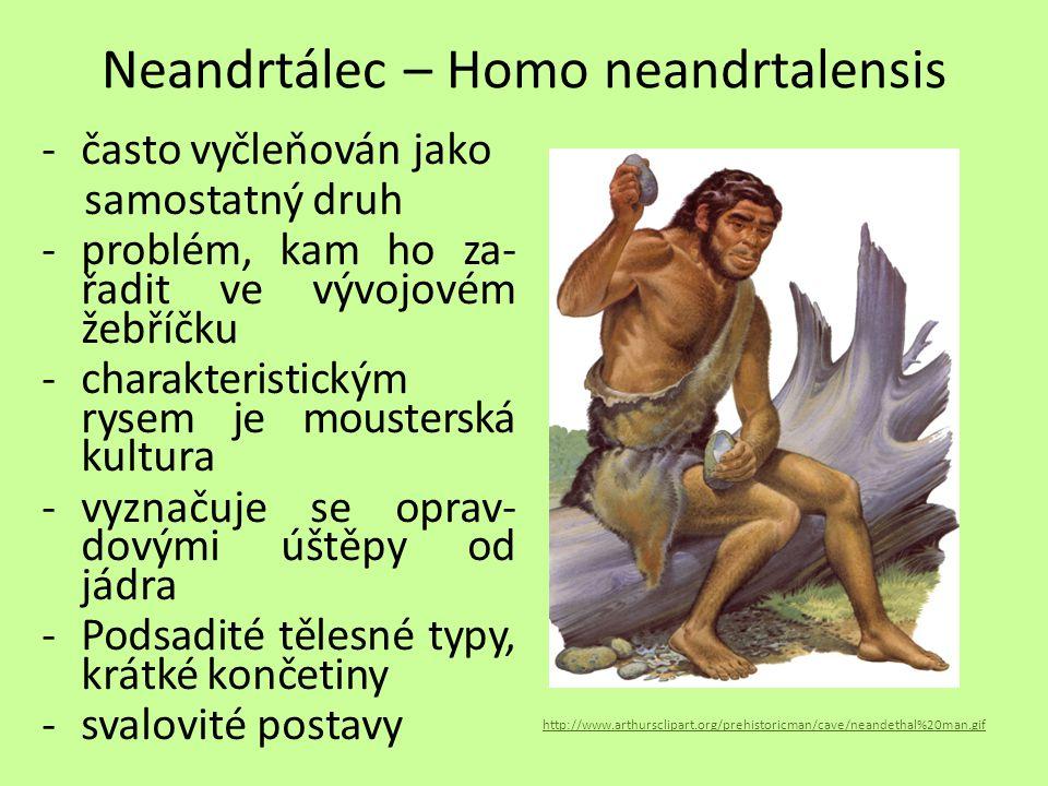 Neandrtálec – Homo neandrtalensis -často vyčleňován jako samostatný druh -problém, kam ho za- řadit ve vývojovém žebříčku -charakteristickým rysem je