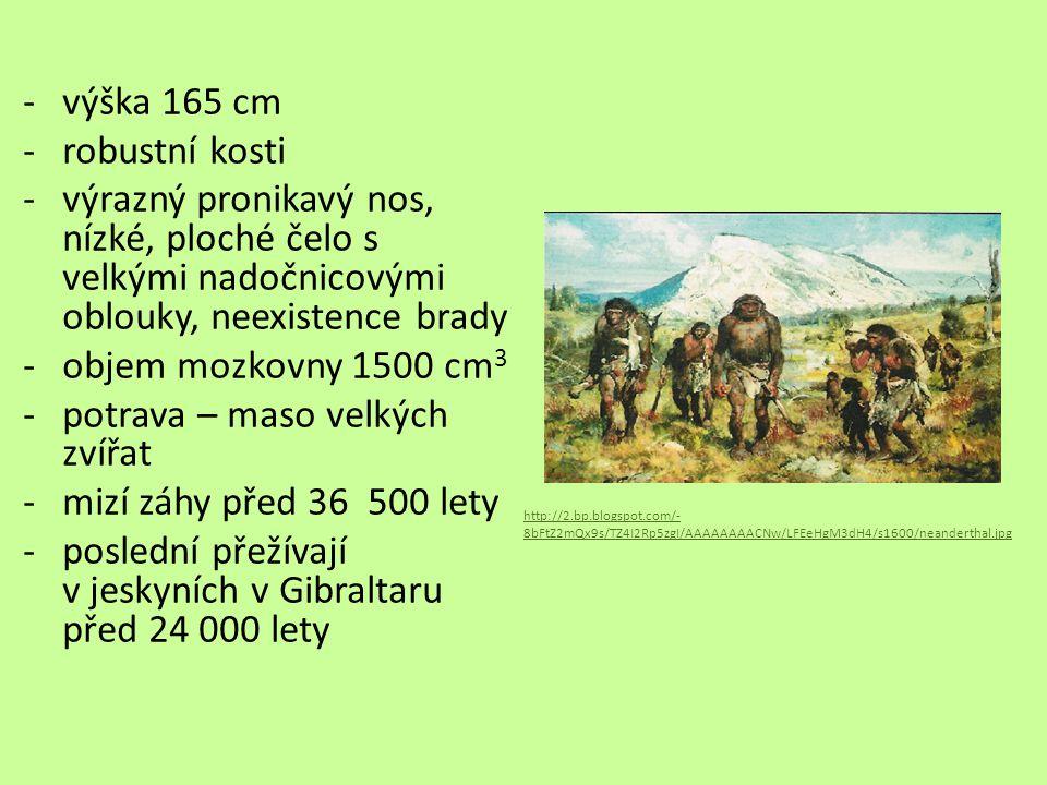 Homo sapines (Člověk rozumný) -před 280 000 – 80 000 lety -vertikální držení těla -rozumová inteligence -schopnost mluvit -do Evropy přicházejí před 45 000 lety -postupně nahradili neandrtálce