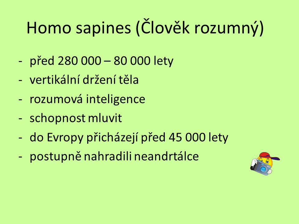 Homo sapines (Člověk rozumný) -před 280 000 – 80 000 lety -vertikální držení těla -rozumová inteligence -schopnost mluvit -do Evropy přicházejí před 4