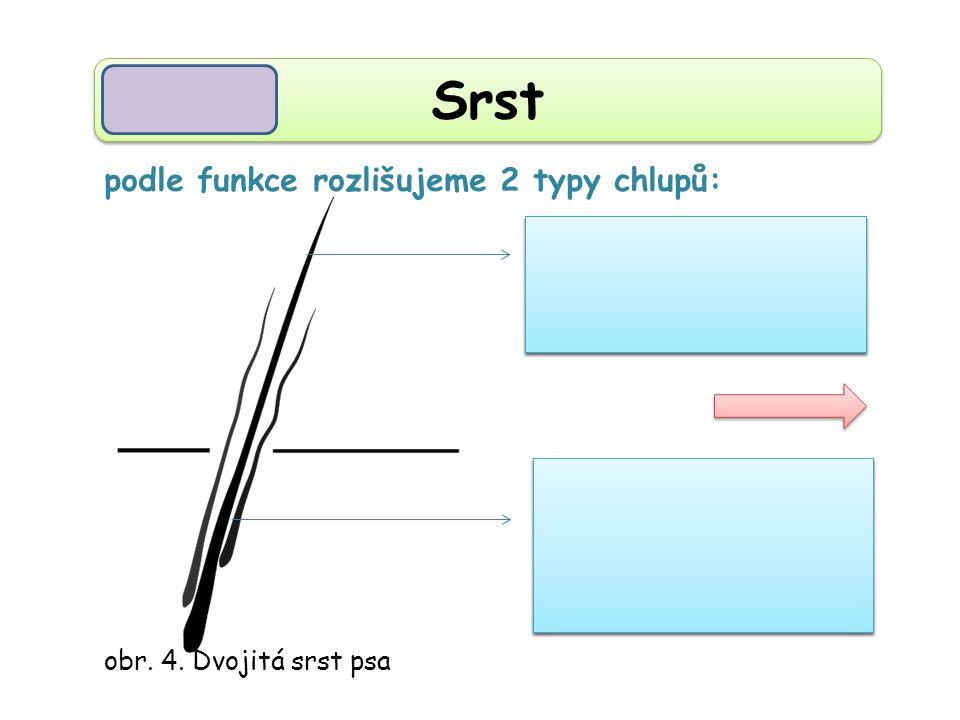 podsada (krátká, měkká, zajišťuje tepelnou izolaci) podsada (krátká, měkká, zajišťuje tepelnou izolaci) Srst obr.