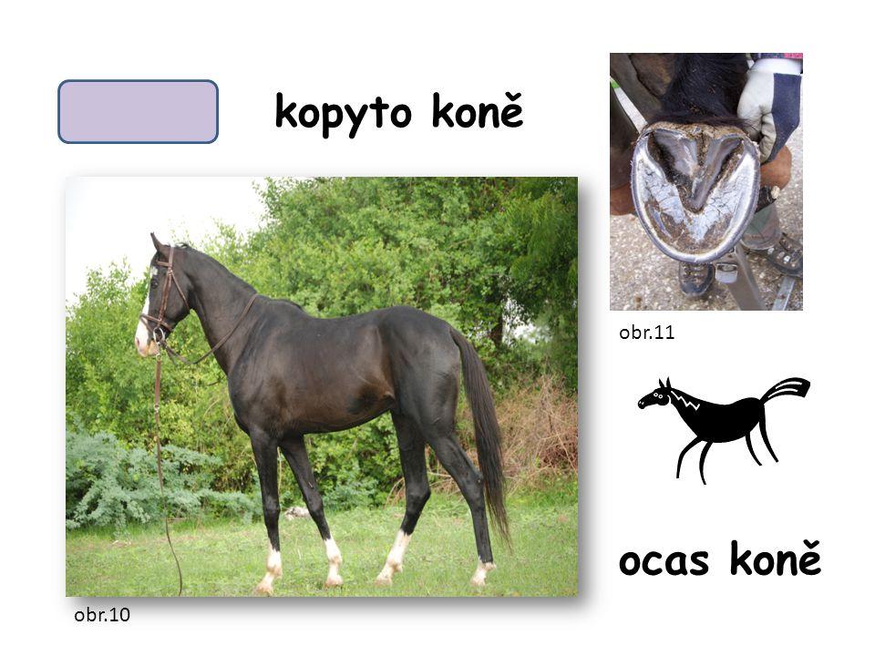 kopyto koně ocas koně obr.10 obr.11