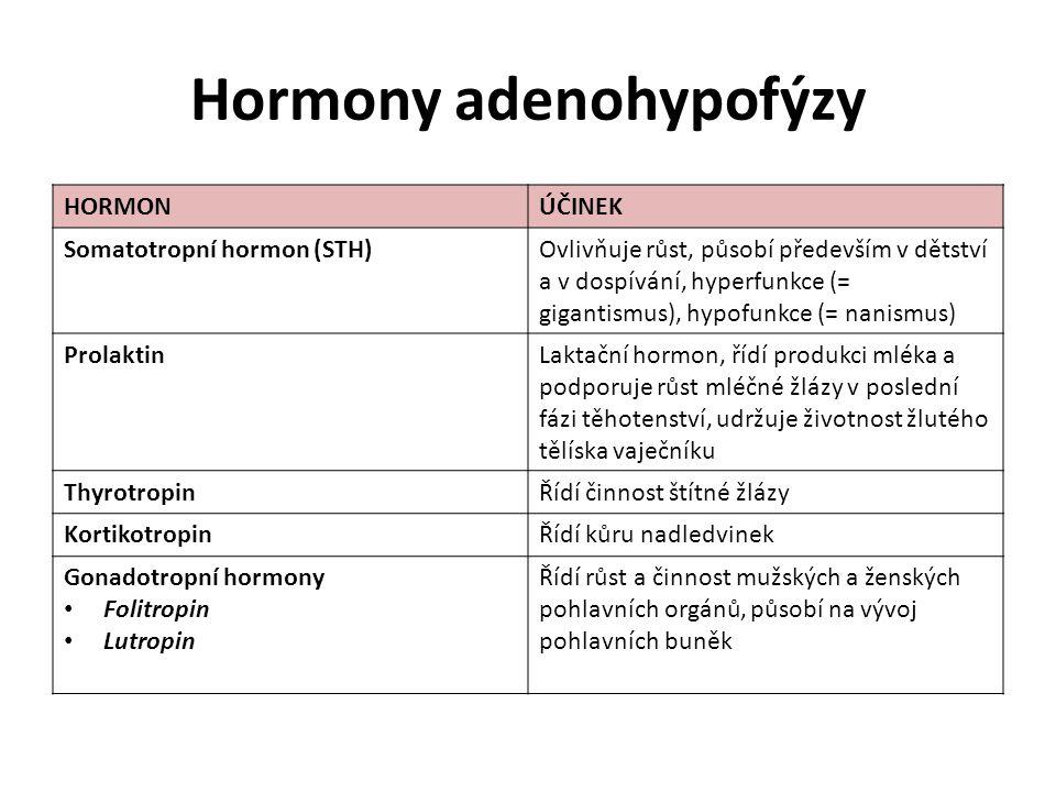 Hormony adenohypofýzy HORMONÚČINEK Somatotropní hormon (STH)Ovlivňuje růst, působí především v dětství a v dospívání, hyperfunkce (= gigantismus), hypofunkce (= nanismus) ProlaktinLaktační hormon, řídí produkci mléka a podporuje růst mléčné žlázy v poslední fázi těhotenství, udržuje životnost žlutého tělíska vaječníku ThyrotropinŘídí činnost štítné žlázy KortikotropinŘídí kůru nadledvinek Gonadotropní hormony Folitropin Lutropin Řídí růst a činnost mužských a ženských pohlavních orgánů, působí na vývoj pohlavních buněk