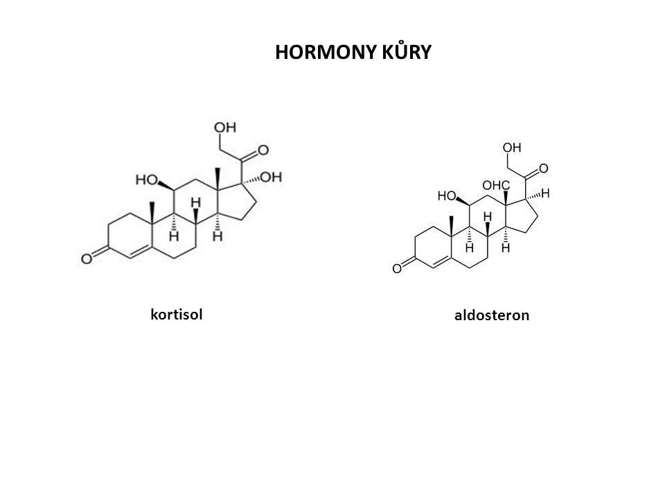 HORMONY KŮRY kortisol aldosteron