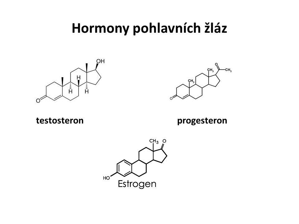 Hormony pohlavních žláz testosteron progesteron