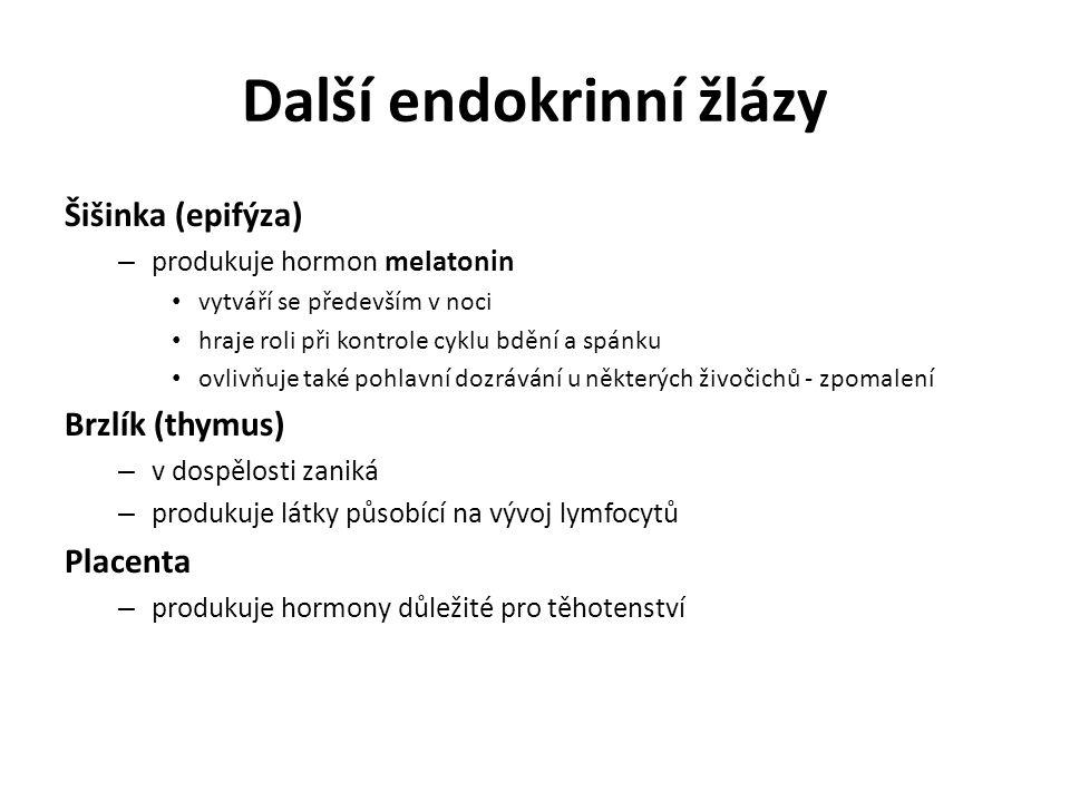 Další endokrinní žlázy Šišinka (epifýza) – produkuje hormon melatonin vytváří se především v noci hraje roli při kontrole cyklu bdění a spánku ovlivňuje také pohlavní dozrávání u některých živočichů - zpomalení Brzlík (thymus) – v dospělosti zaniká – produkuje látky působící na vývoj lymfocytů Placenta – produkuje hormony důležité pro těhotenství