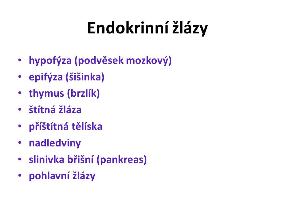Endokrinní žlázy hypofýza (podvěsek mozkový) epifýza (šišinka) thymus (brzlík) štítná žláza příštítná tělíska nadledviny slinivka břišní (pankreas) pohlavní žlázy