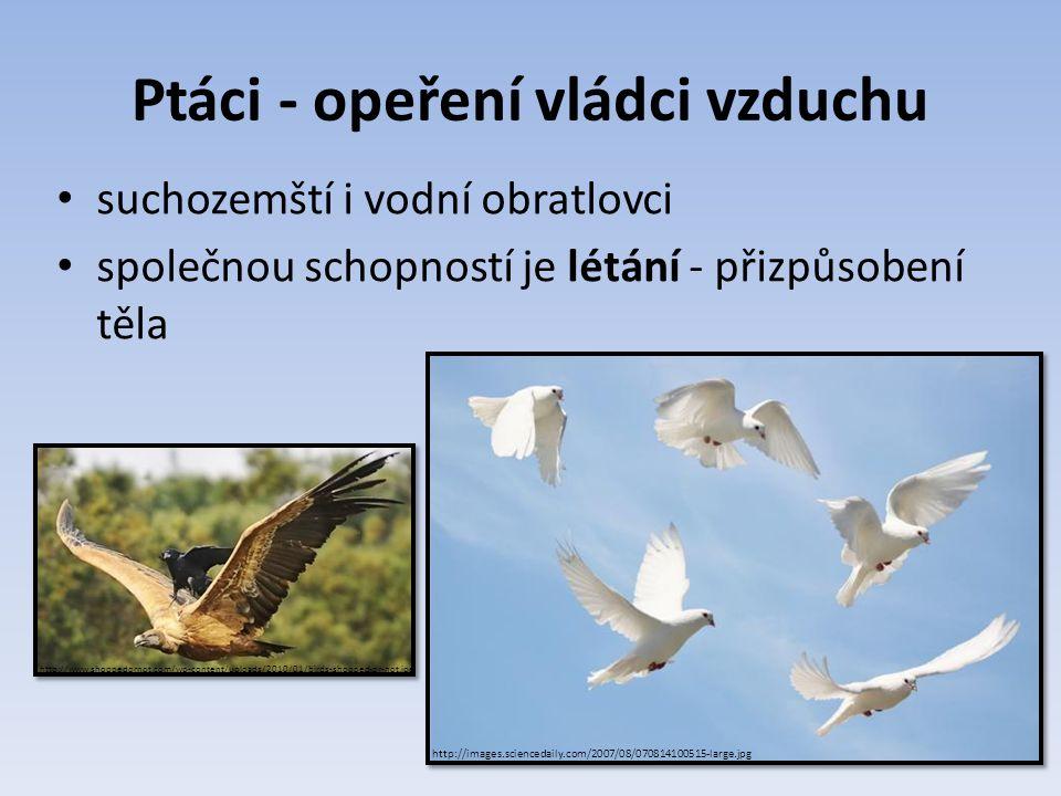 Ptáci - opeření vládci vzduchu suchozemští i vodní obratlovci společnou schopností je létání - přizpůsobení těla http://www.shoppedornot.com/wp-conten