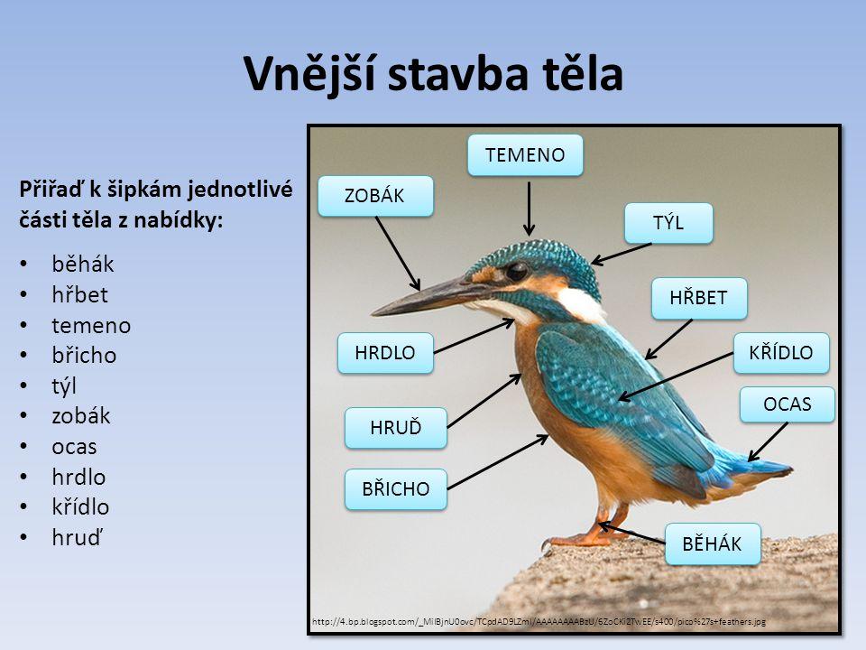 Povrch tenká a suchá kůže z kůže vyrůstá peří rohovité šupiny na nohách a zobáku http://www.ireceptar.cz/res/data/124/015141.jpg