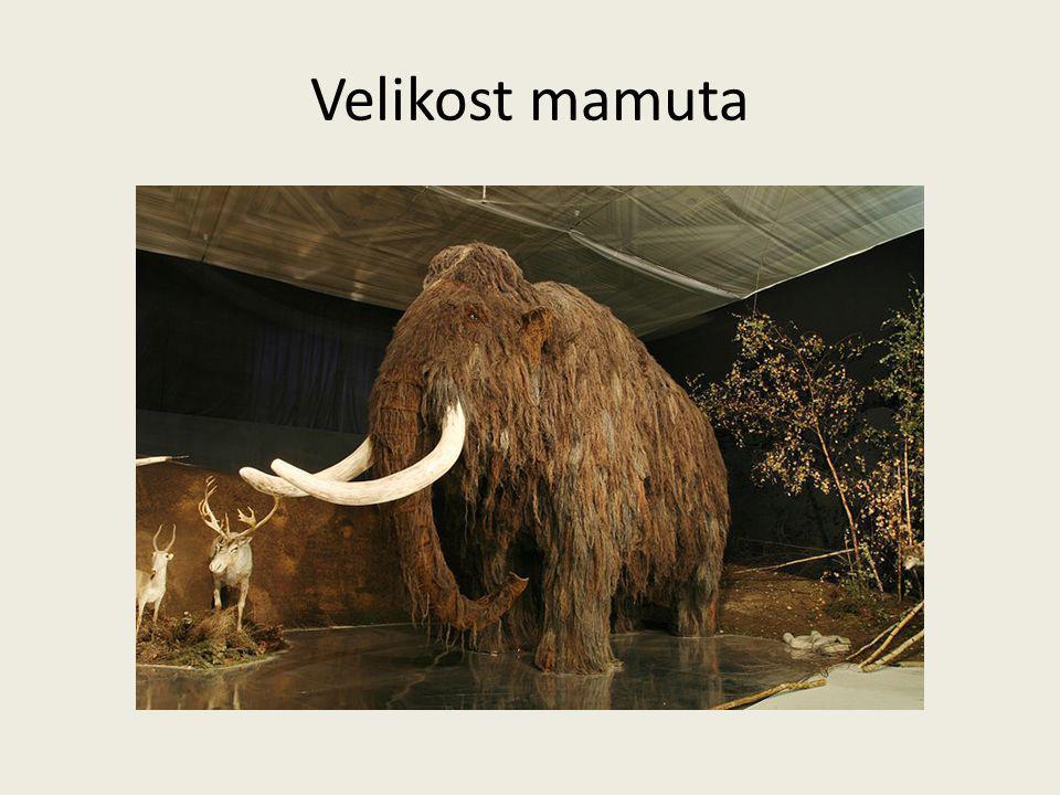 Velikost mamuta