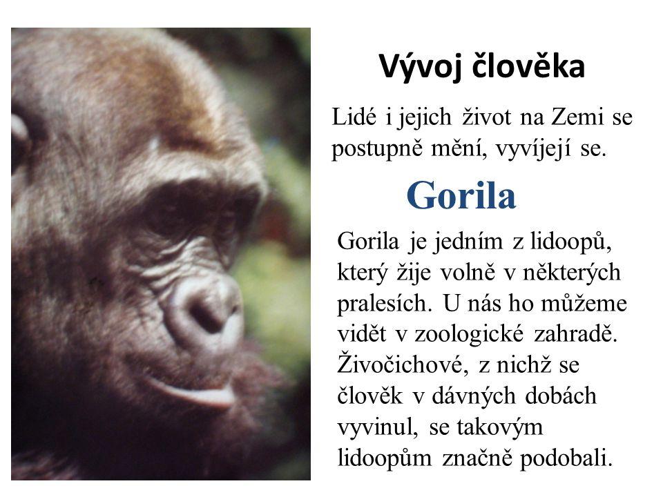 Vývoj člověka Lidé i jejich život na Zemi se postupně mění, vyvíjejí se. Gorila je jedním z lidoopů, který žije volně v některých pralesích. U nás ho