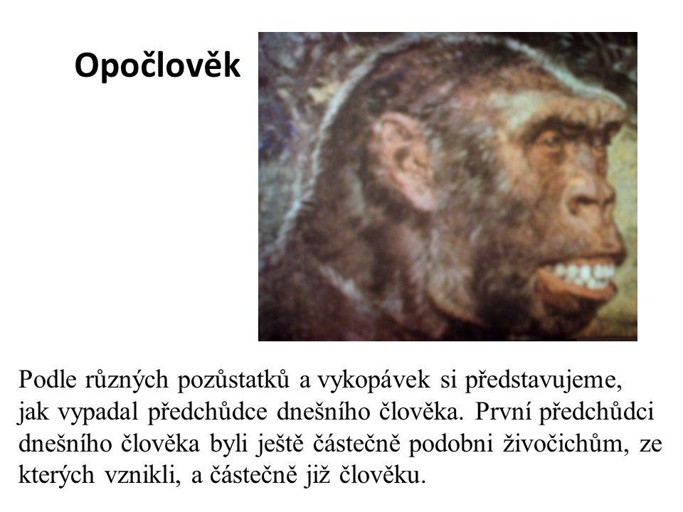 Opočlověk Podle různých pozůstatků a vykopávek si představujeme, jak vypadal předchůdce dnešního člověka. První předchůdci dnešního člověka byli ještě
