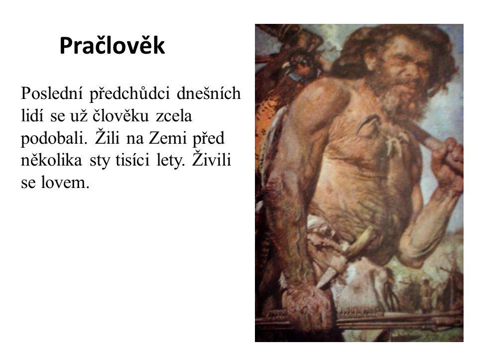 Pračlověk Poslední předchůdci dnešních lidí se už člověku zcela podobali. Žili na Zemi před několika sty tisíci lety. Živili se lovem.