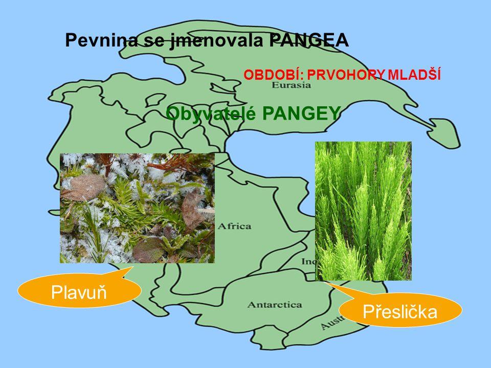 OBDOBÍ: PRVOHORY MLADŠÍ Pevnina se jmenovala PANGEA Obyvatelé PANGEY Plavuň Přeslička