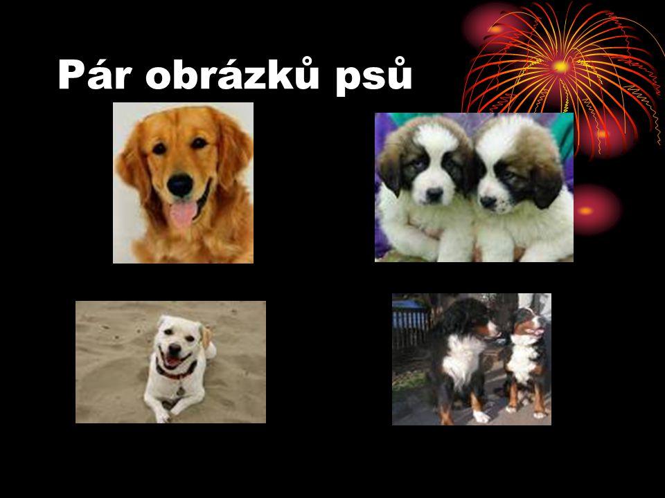 Pár obrázků psů