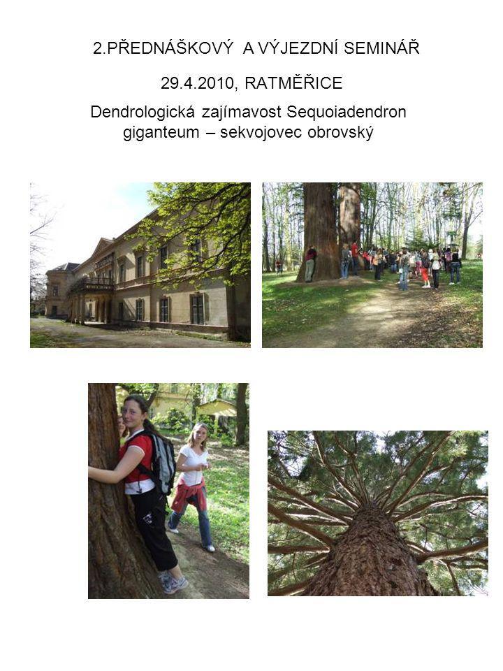 29.4.2010, RATMĚŘICE 2.PŘEDNÁŠKOVÝ A VÝJEZDNÍ SEMINÁŘ Dendrologická zajímavost Sequoiadendron giganteum – sekvojovec obrovský