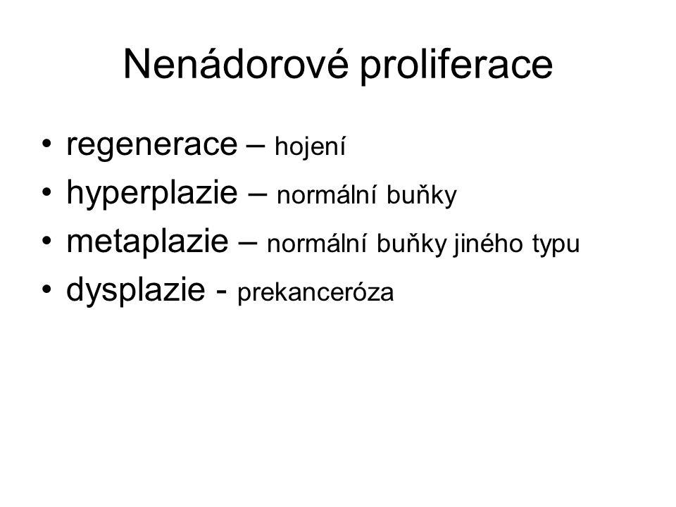 Nenádorové proliferace regenerace – hojení hyperplazie – normální buňky metaplazie – normální buňky jiného typu dysplazie - prekanceróza