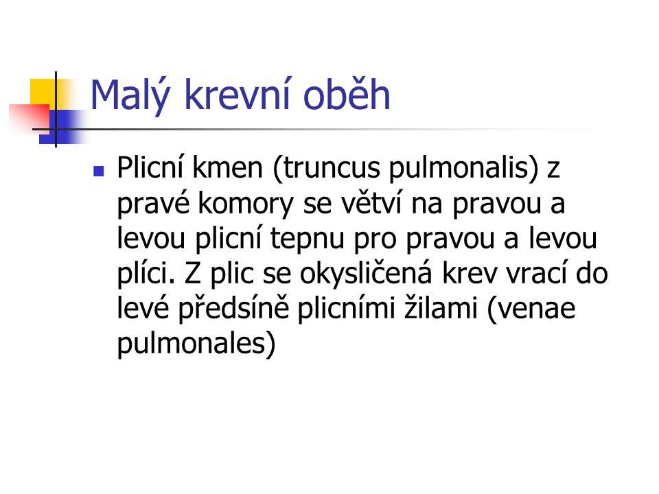 Malý krevní oběh Plicní kmen (truncus pulmonalis) z pravé komory se větví na pravou a levou plicní tepnu pro pravou a levou plíci. Z plic se okysličen