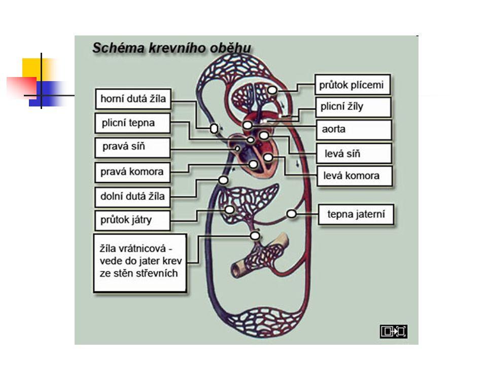 Portální systém jater: Krev z nepárových orgánů dutiny břišní je vrátnicovou žilou (vena portae) přiváděna do jater.