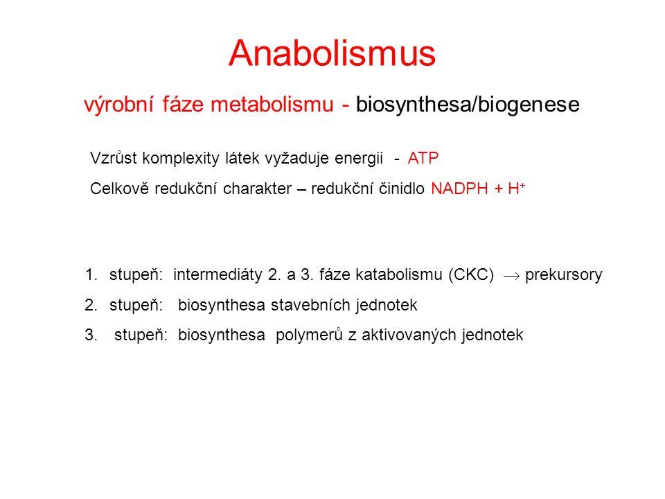 proteiny aminokyseliny polysacharidy glukosa lipidy Glycerol + mastné kyseliny I. fáze II. fáze III. fáze Katabolismus - chemoorganotrofní anaerobní