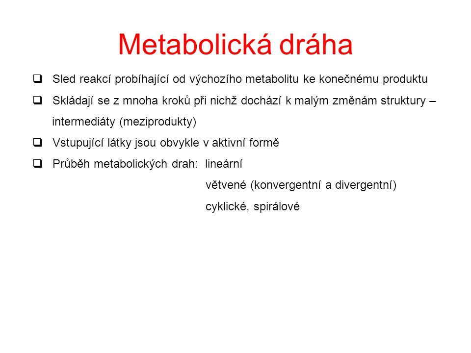 Katabolismus versus anabolismus: A.Protichůdný charakter degradační x syntetický oxidační x redukční energii poskytuje x spotřebovává konvergentní x d