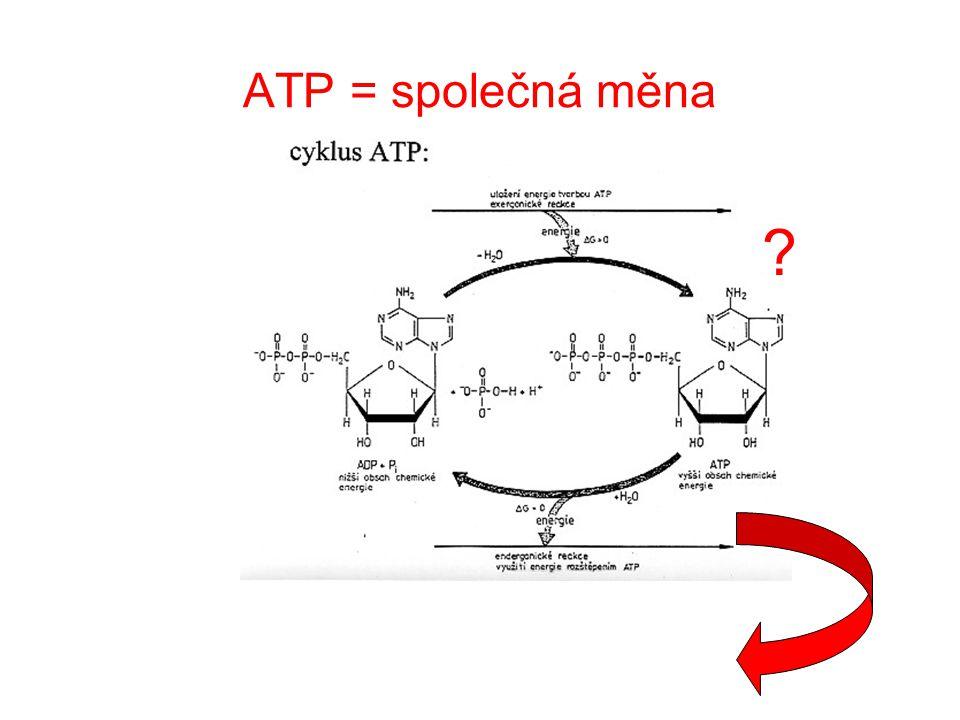Metabolická dráha  Sled reakcí probíhající od výchozího metabolitu ke konečnému produktu  Skládají se z mnoha kroků při nichž dochází k malým změnám struktury – intermediáty (meziprodukty)  Vstupující látky jsou obvykle v aktivní formě  Průběh metabolických drah: lineární větvené (konvergentní a divergentní) cyklické, spirálové