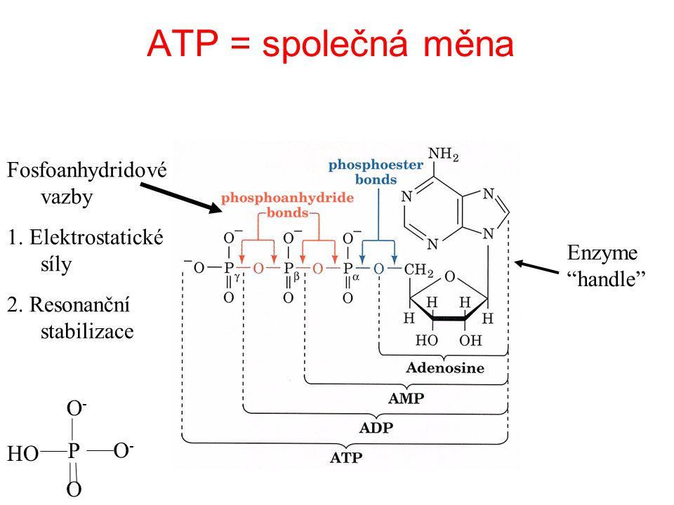 ATP = společná měna ?