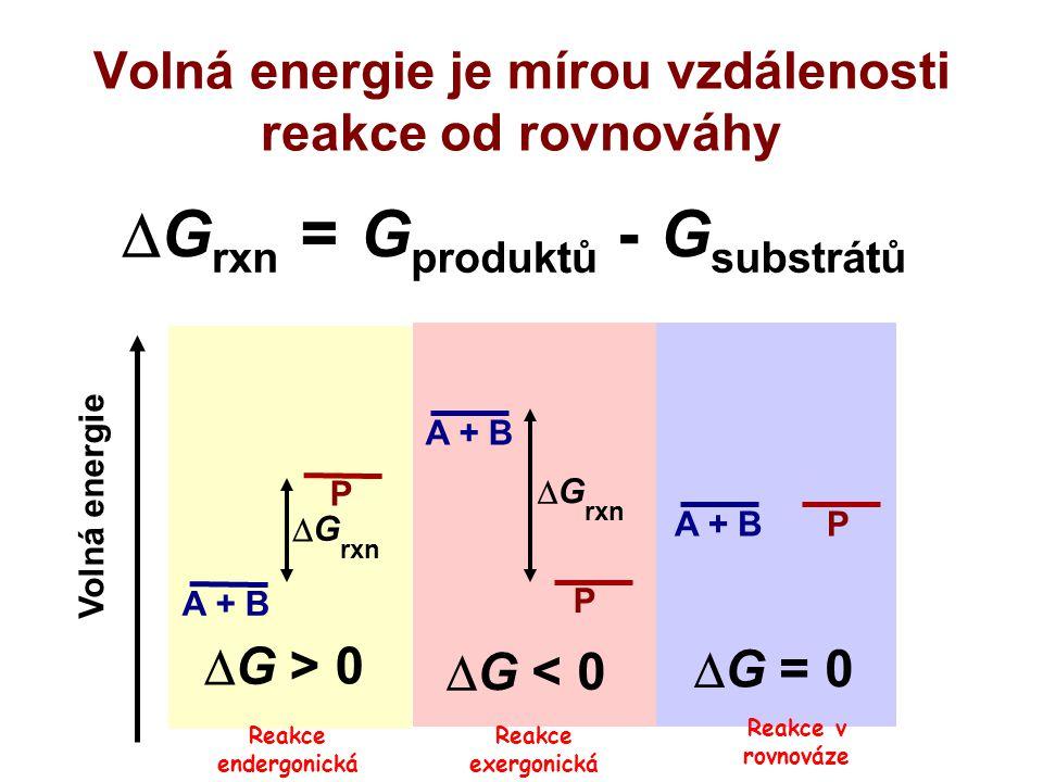 Bioenergetika Platí: I.věta termodynamická (zákon zachování energie) II.