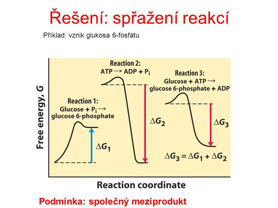 děj exergonický:  G < 0 - probíhá samovolně - nepotřebuje dodávat energii - katabolismus (celkově) děj endergonický :  G > 0 (pozor: neexistují!!) p