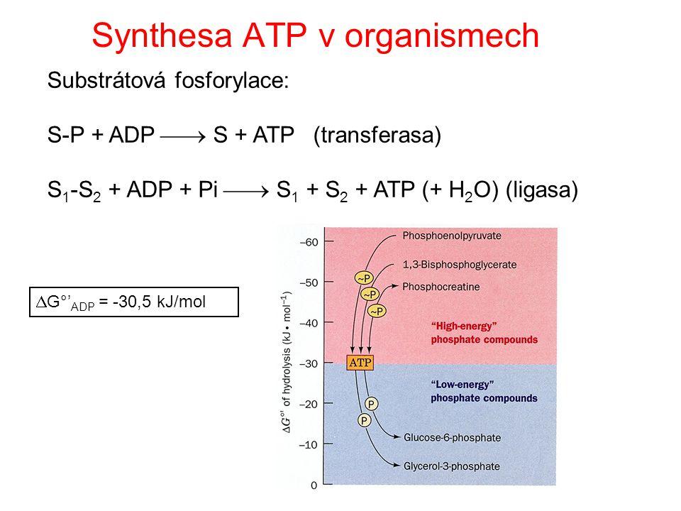 Řešení: spřažení reakcí Podmínka: společný meziprodukt Příklad: vznik glukosa 6-fosfátu