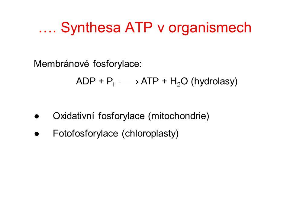 Synthesa ATP v organismech Substrátová fosforylace: S-P + ADP  S + ATP (transferasa) S 1 -S 2 + ADP + Pi  S 1 + S 2 + ATP (+ H 2 O) (ligasa)  G°' ADP = -30,5 kJ/mol