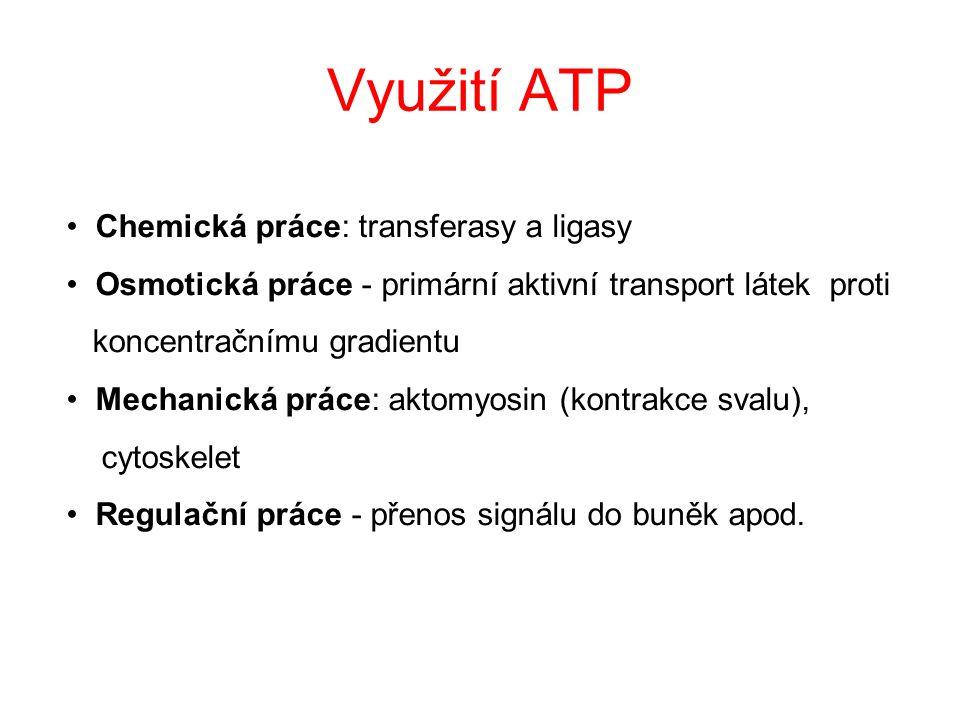 …. Synthesa ATP v organismech Membránové fosforylace: ADP + P i  ATP + H 2 O (hydrolasy) ● Oxidativní fosforylace (mitochondrie) ● Fotofosforylace (