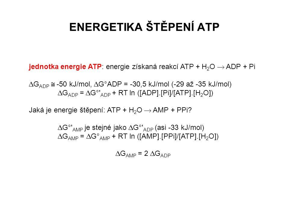 Využití ATP Chemická práce: transferasy a ligasy Osmotická práce - primární aktivní transport látek proti koncentračnímu gradientu Mechanická práce: aktomyosin (kontrakce svalu), cytoskelet Regulační práce - přenos signálu do buněk apod.