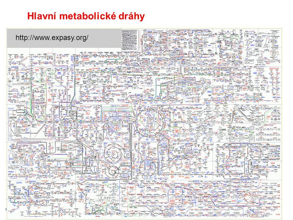 Autotrofyheterotrofy Základní koncept metabolismu a bioenergetiky