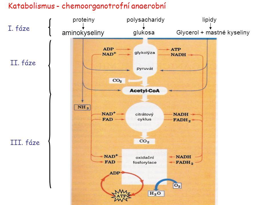 Hlavní metabolické dráhy http://www.expasy.org/