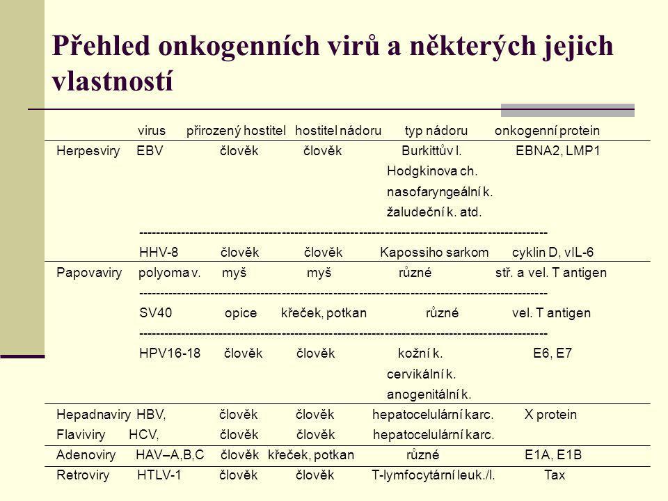 Přehled onkogenních virů a některých jejich vlastností virus přirozený hostitel hostitel nádoru typ nádoru onkogenní protein Herpesviry EBV člověk člo
