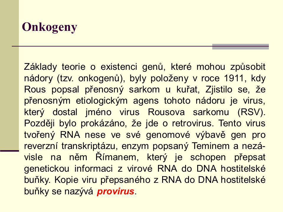 Onkogeny Základy teorie o existenci genů, které mohou způsobit nádory (tzv. onkogenů), byly položeny v roce 1911, kdy Rous popsal přenosný sarkom u ku