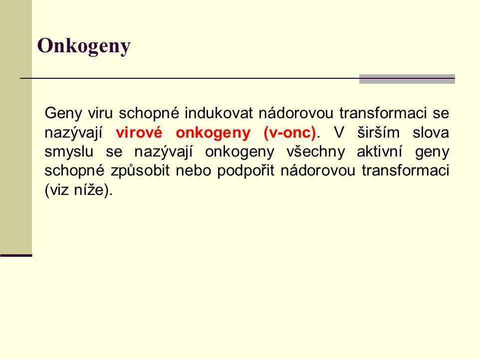 Onkogeny Geny viru schopné indukovat nádorovou transformaci se nazývají virové onkogeny (v-onc). V širším slova smyslu se nazývají onkogeny všechny ak