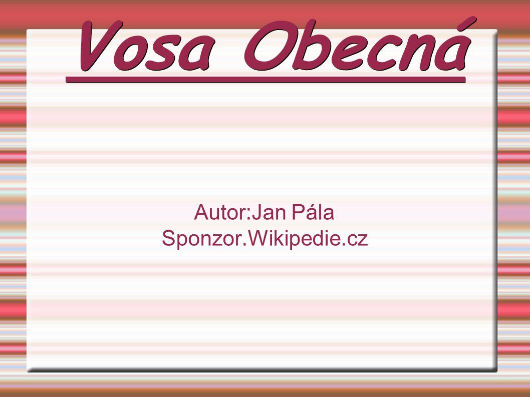 Vosa Obecná Autor:Jan Pála Sponzor.Wikipedie.cz