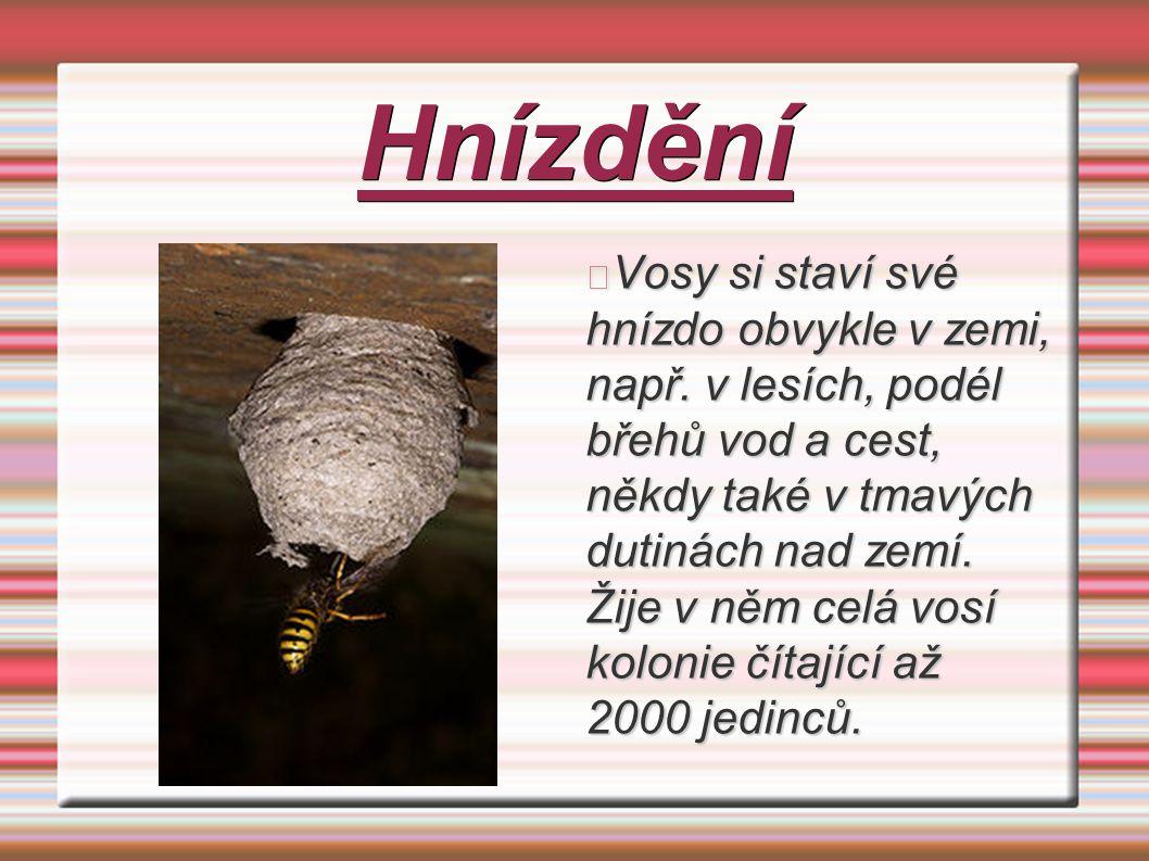 Hnízdění Vosy si staví své hnízdo obvykle v zemi, např. v lesích, podél břehů vod a cest, někdy také v tmavých dutinách nad zemí. Žije v něm celá vosí