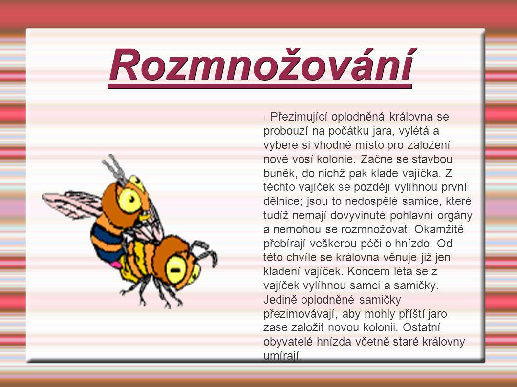 Vědecká Klasifikace Říše: živočichové (Animalia) Kmen: členovci (Arthropoda) Třída: hmyz (Insecta) Řád: blanokřídlí (Hymenoptera) Podřád: žahadlovití (Aculeata) Čeleď: sršňovití (Vespidae) Rod: vosa (Vespula) Děkuji za pozornost