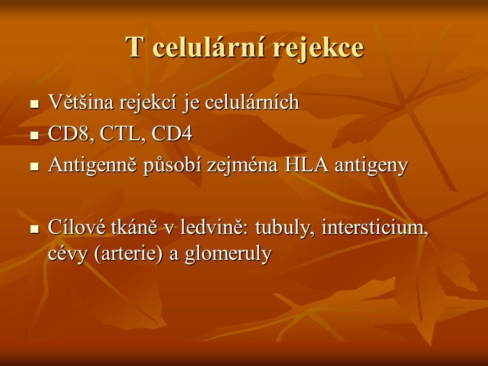 T celulární rejekce Většina rejekcí je celulárních Většina rejekcí je celulárních CD8, CTL, CD4 CD8, CTL, CD4 Antigenně působí zejména HLA antigeny An